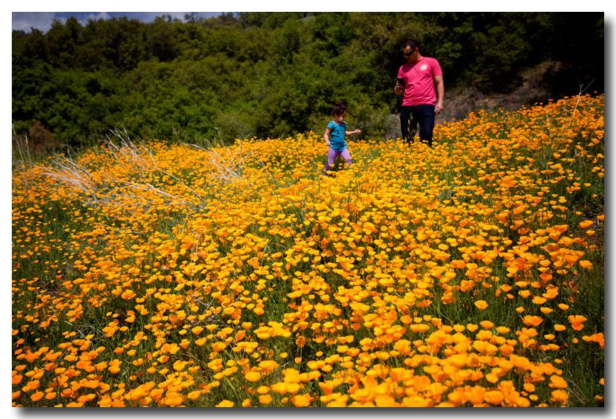 《酒一船摄影》:加州四月野花香_图1-8