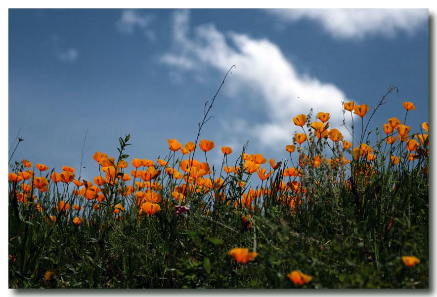 《酒一船摄影》:加州四月野花香_图1-10
