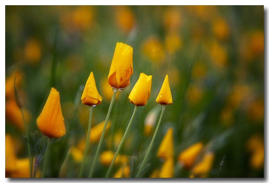 《酒一船摄影》:加州四月野花香_图1-12