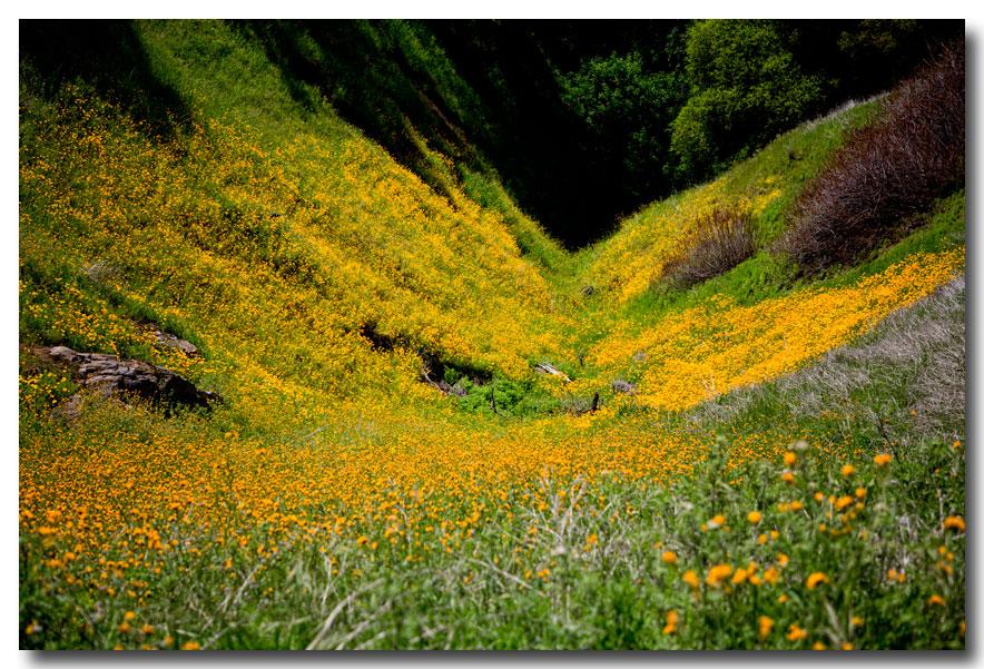 《酒一船摄影》:加州四月野花香_图1-14