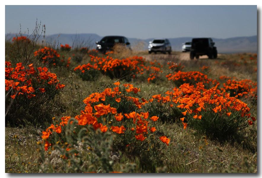 《酒一船摄影》:加州四月野花香_图1-15