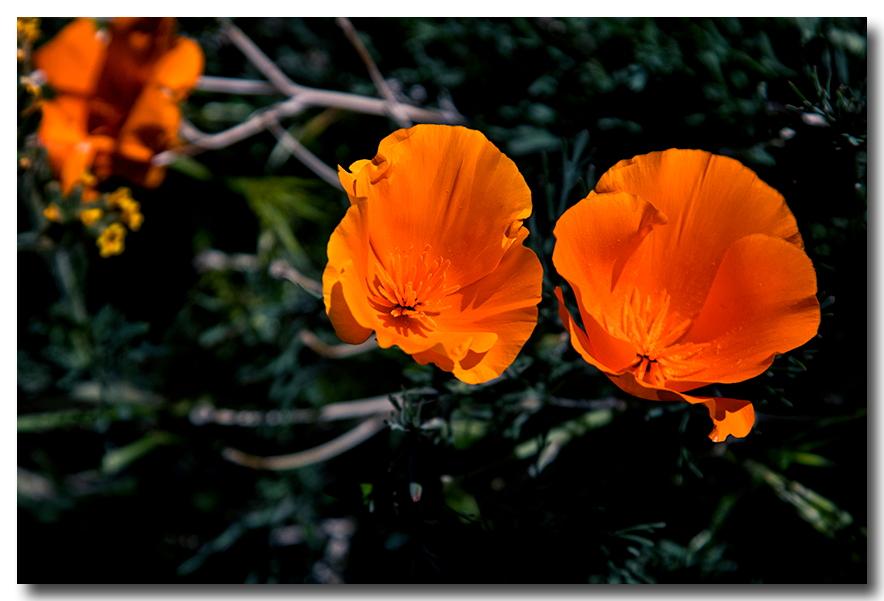 《酒一船摄影》:加州四月野花香_图1-20