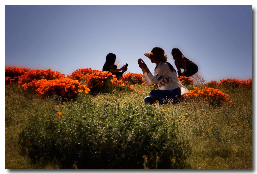 《酒一船摄影》:加州四月野花香_图1-21