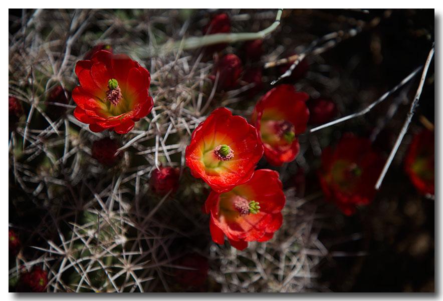 《酒一船摄影》:加州四月野花香_图1-28