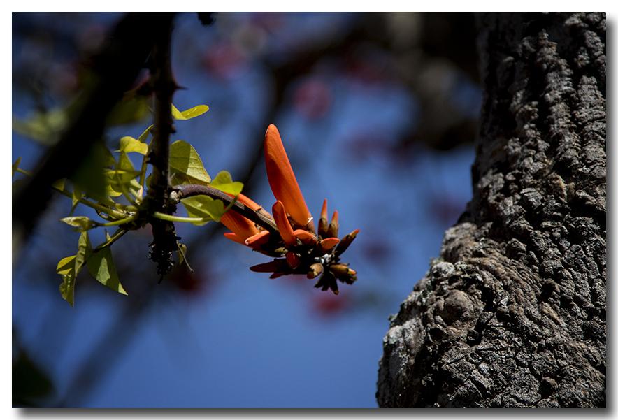 《酒一船摄影》:加州四月野花香_图1-35