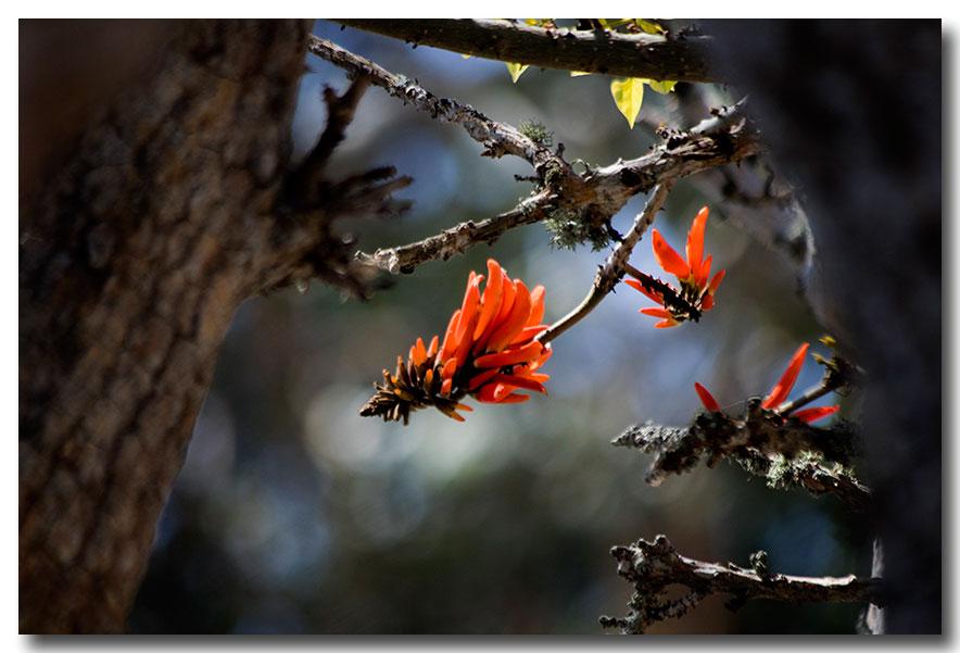 《酒一船摄影》:加州四月野花香_图1-37