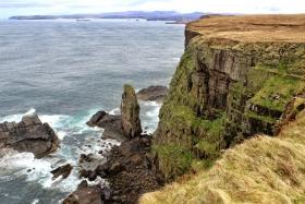 苏格兰海崖上的鸟