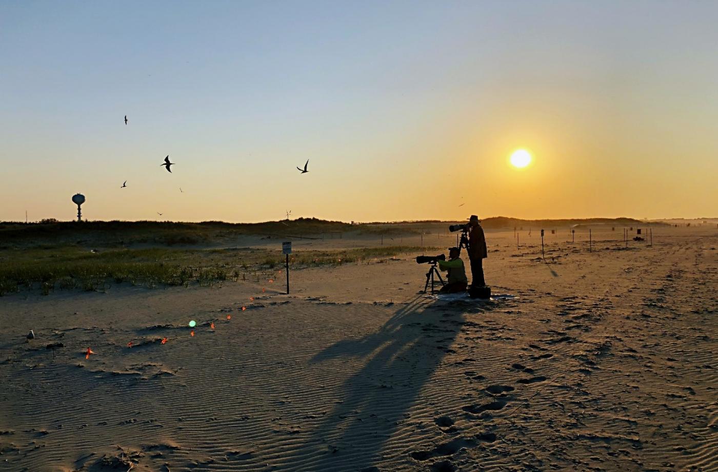 【田螺摄影】nickerson beach拍燕鸥求爱[二]_图1-25