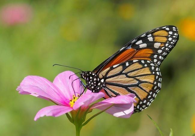 蝴蝶 蜻蜒 蜜蜂_图1-4