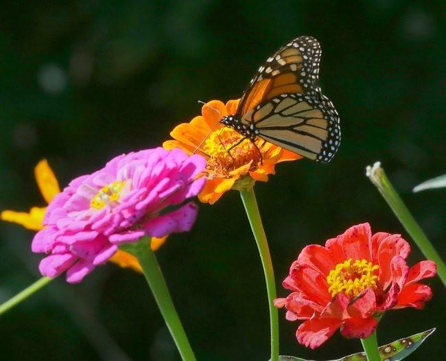 蝴蝶 蜻蜒 蜜蜂_图1-10