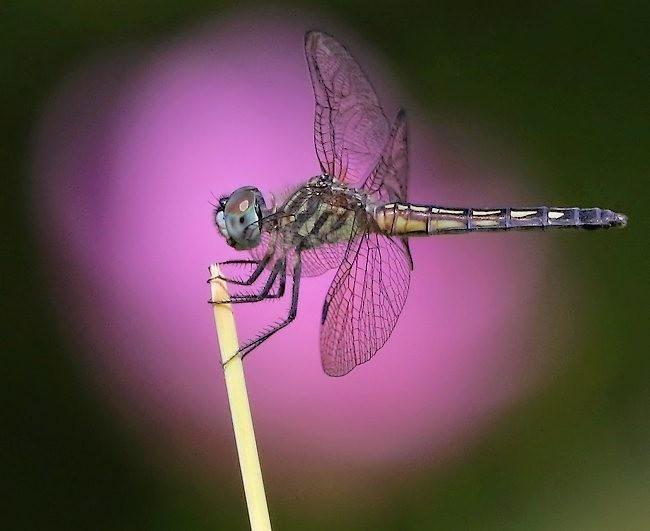 蝴蝶 蜻蜒 蜜蜂   2_图1-1