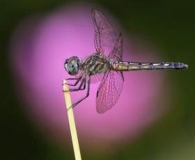 蝴蝶 蜻蜒 蜜蜂   2