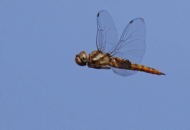 蝴蝶 蜻蜒 蜜蜂   2_图1-2