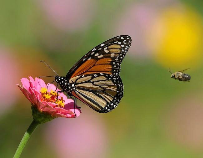 蝴蝶 蜻蜒 蜜蜂   2_图1-3