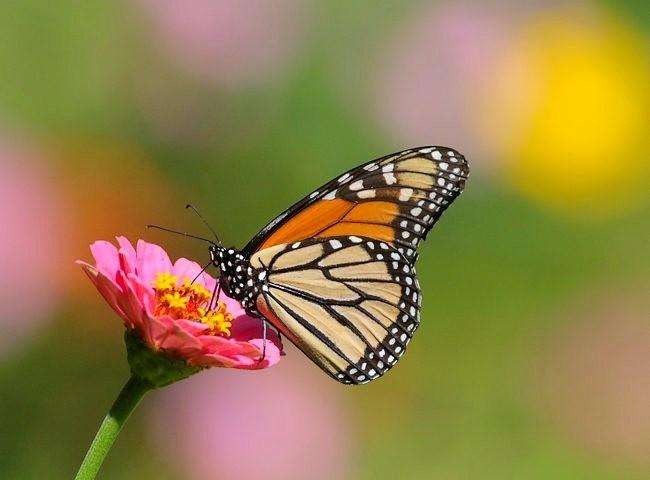 蝴蝶 蜻蜒 蜜蜂   2_图1-4