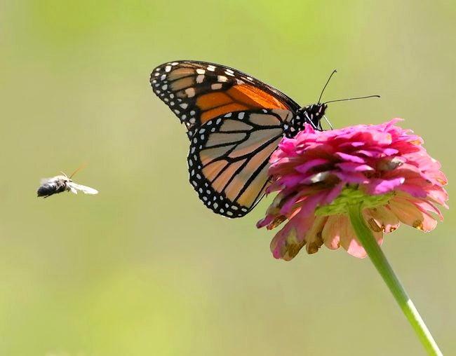蝴蝶 蜻蜒 蜜蜂   2_图1-5