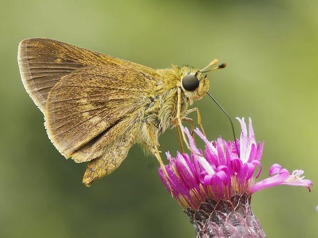 蝴蝶 蜻蜒 蜜蜂   2_图1-6