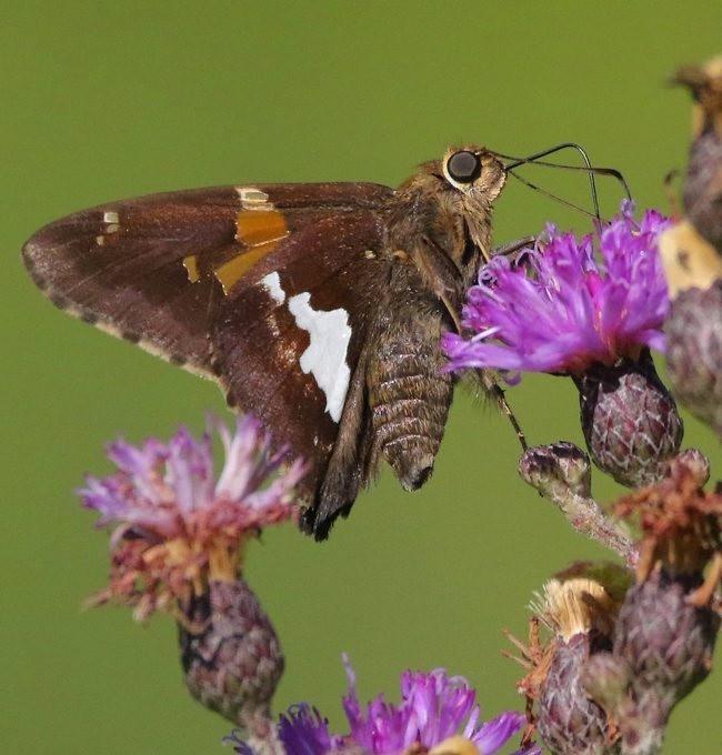 蝴蝶 蜻蜒 蜜蜂   2_图1-7