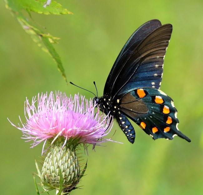 蝴蝶 蜻蜒 蜜蜂   2_图1-8