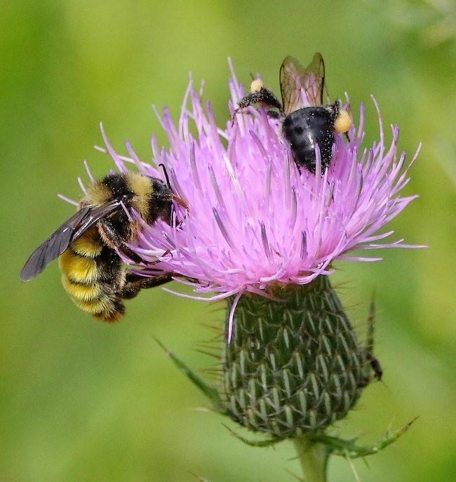 蝴蝶 蜻蜒 蜜蜂   2_图1-9