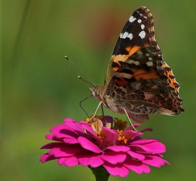 蝴蝶 蜻蜒 蜜蜂   2_图1-10