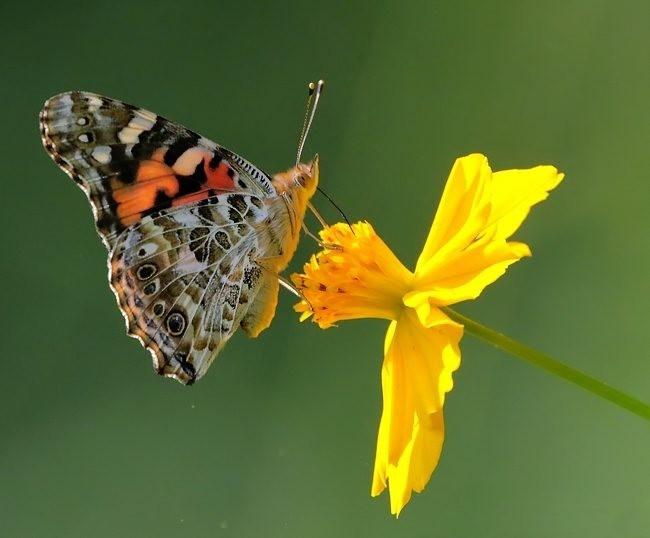 蝴蝶 蜻蜒 蜜蜂   2_图1-11