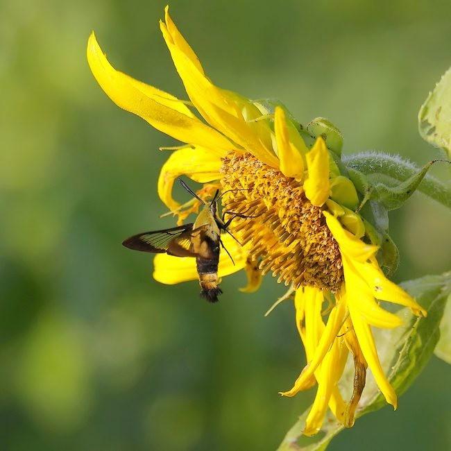 蝴蝶 蜻蜒 蜜蜂   2_图1-12