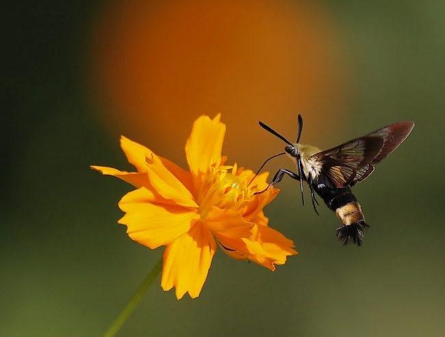 蝴蝶 蜻蜒 蜜蜂   2_图1-13