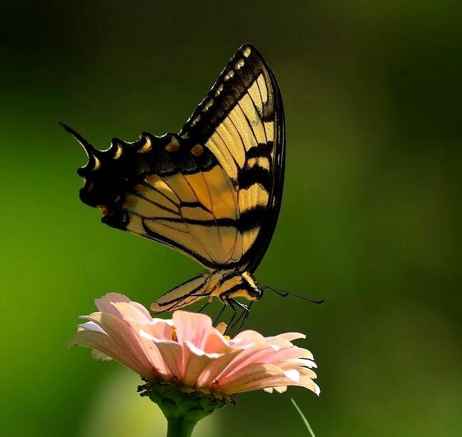 蝴蝶 蜻蜒 蜜蜂   2_图1-14