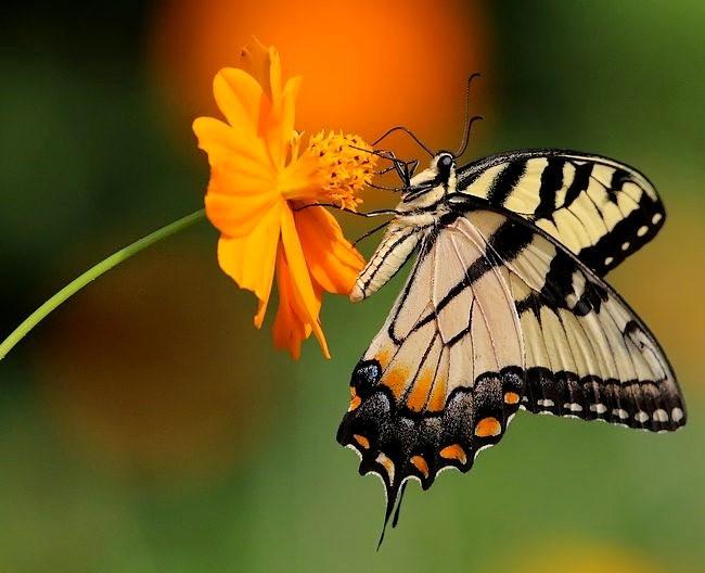 蝴蝶 蜻蜒 蜜蜂   2_图1-15