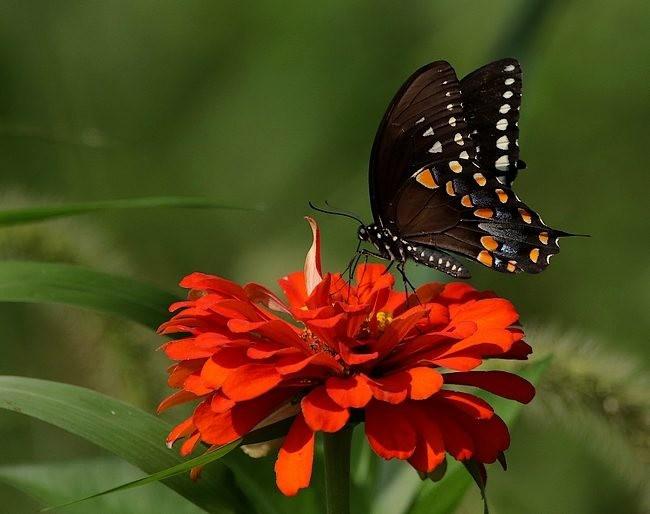 蝴蝶 蜻蜒 蜜蜂   2_图1-16