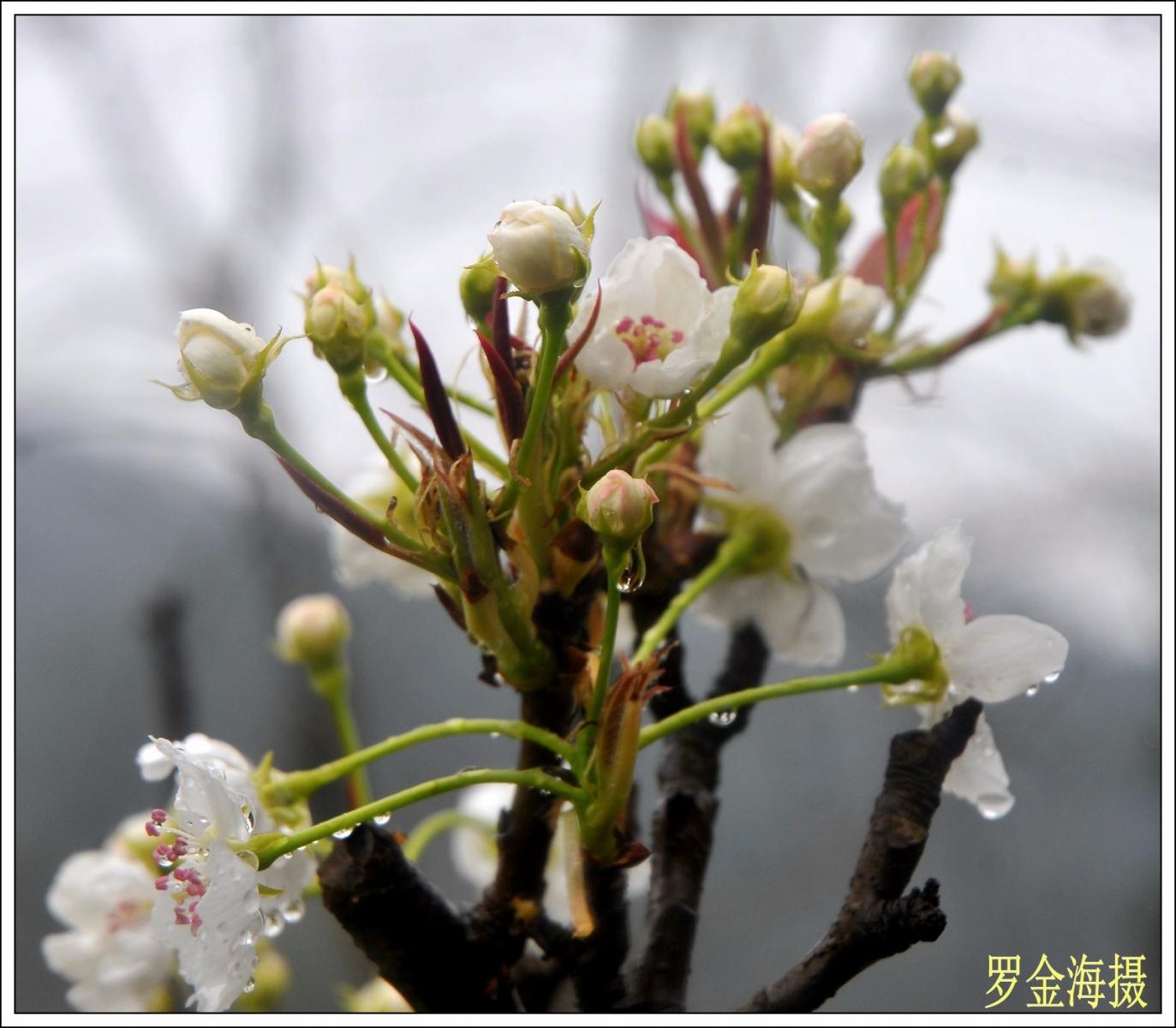 美丽中国,我是行动者(诗歌)_图1-1
