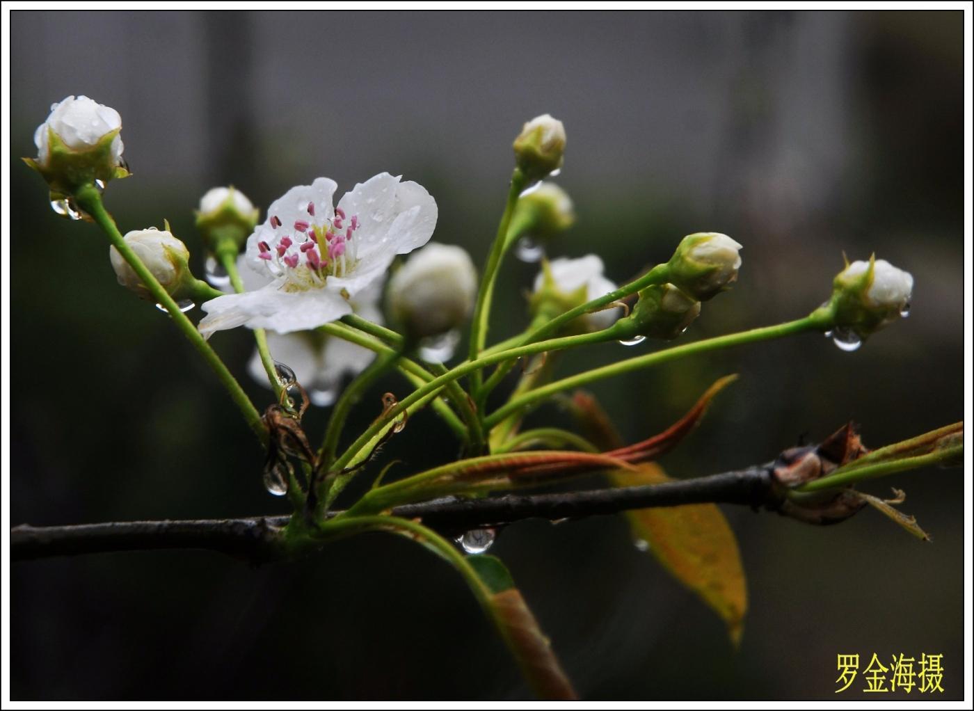 美丽中国,我是行动者(诗歌)_图1-2