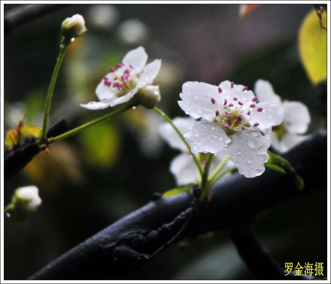 美丽中国,我是行动者(诗歌)_图1-3