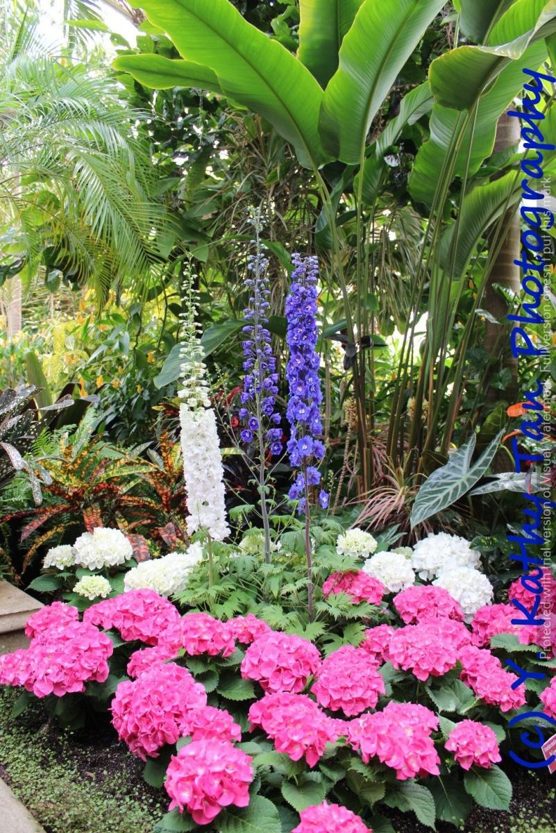 春游Planting Field Arboretum_图1-2