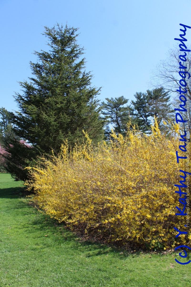春游Planting Field Arboretum_图1-5