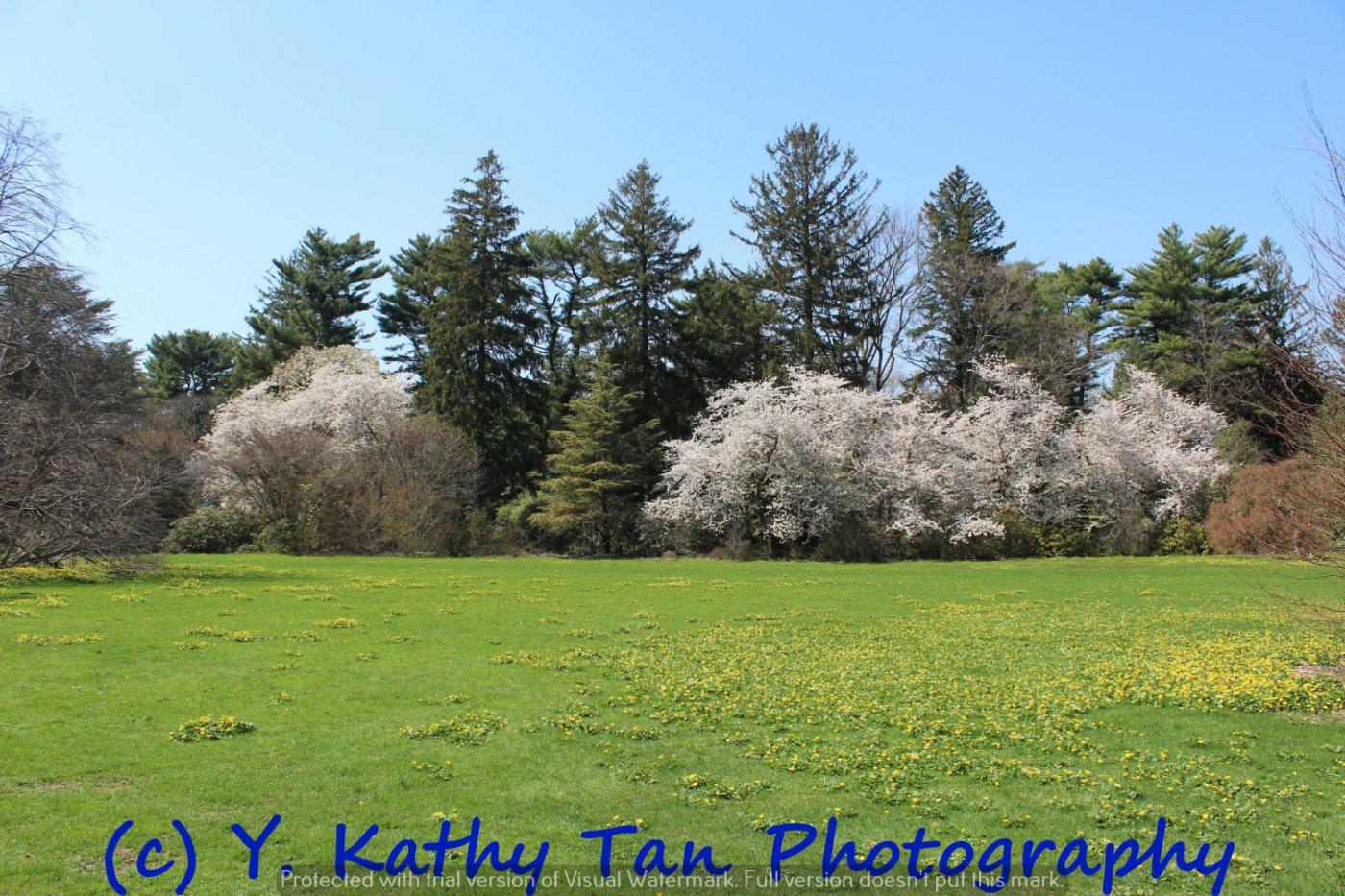 春游Planting Field Arboretum_图1-6