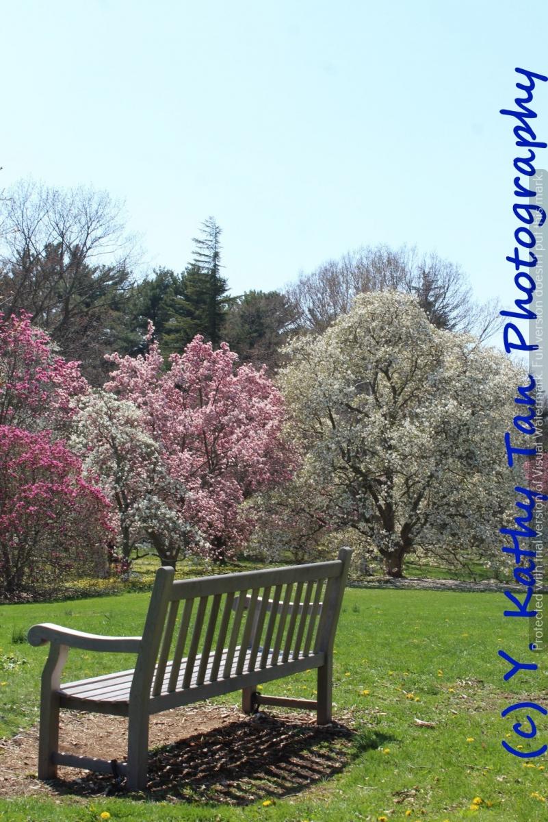 春游Planting Field Arboretum_图1-7