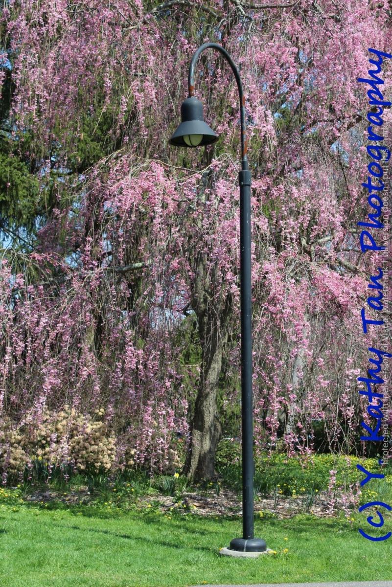 春游Planting Field Arboretum_图1-9