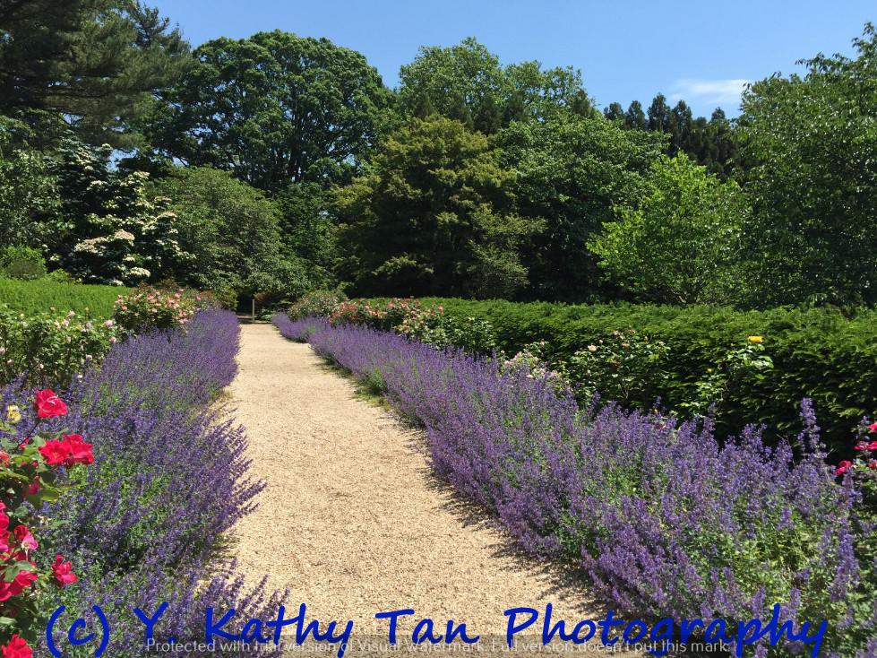 夏游Planting Field Arboretum_图1-6