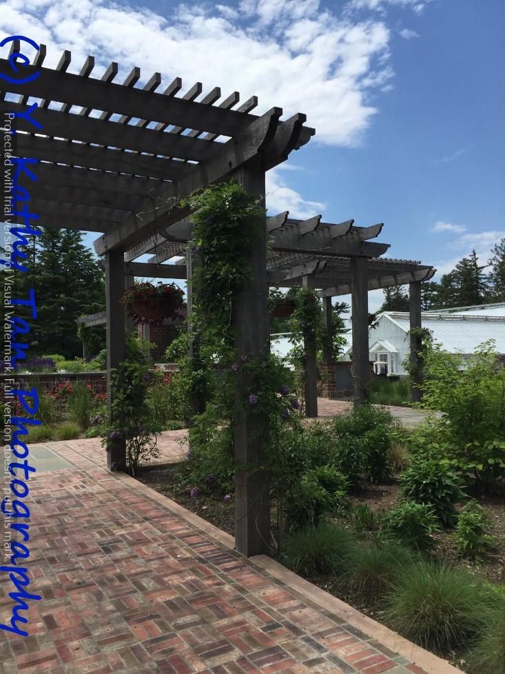 夏游Planting Field Arboretum_图1-1
