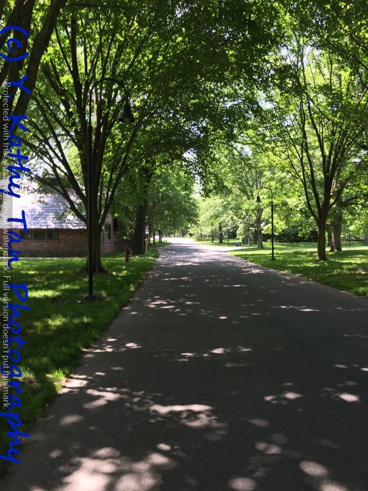 夏游Planting Field Arboretum_图1-4