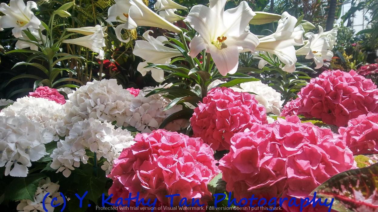 夏游Planting Field Arboretum_图1-2