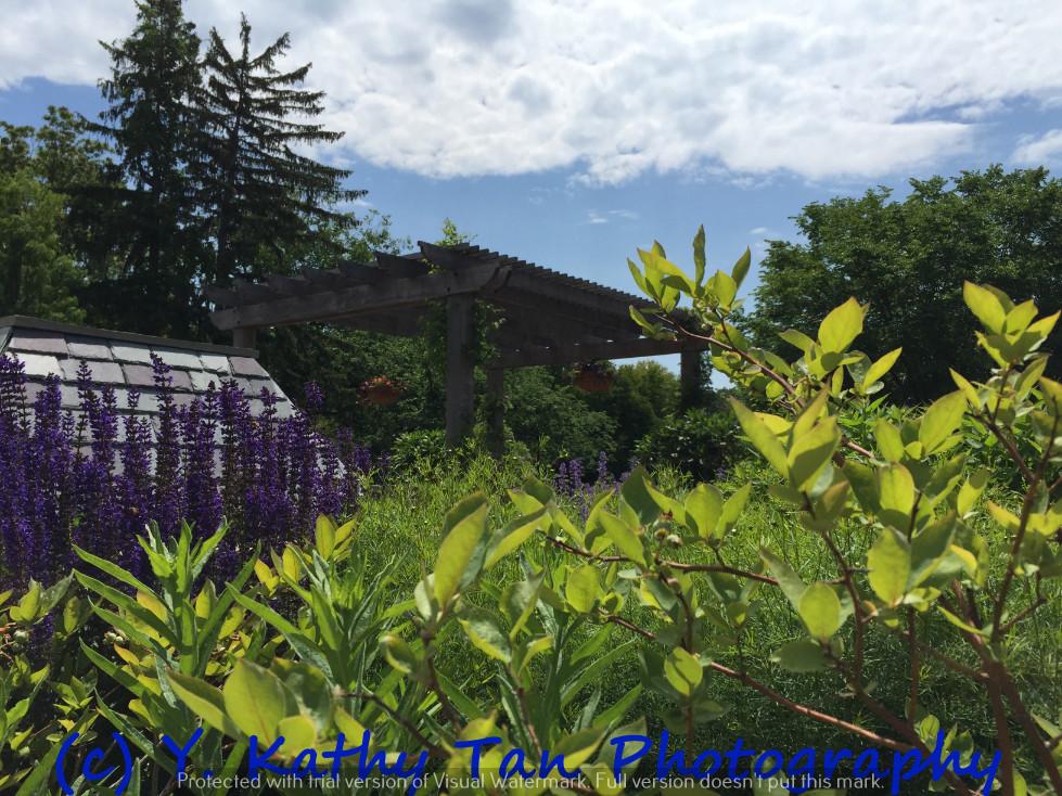 夏游Planting Field Arboretum_图1-5
