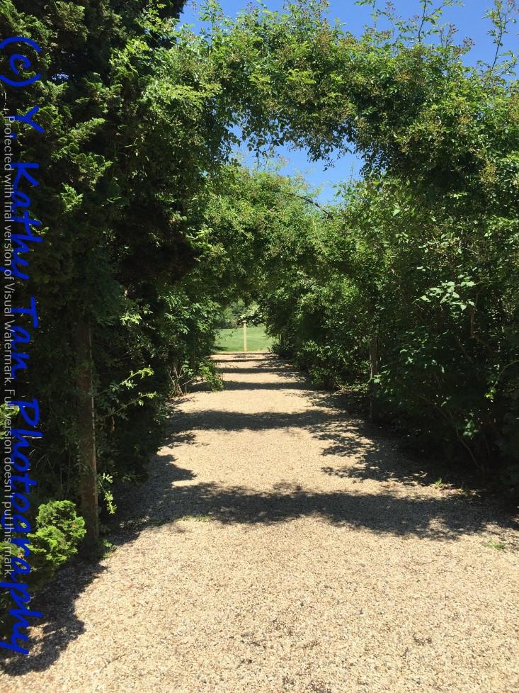 夏游Planting Field Arboretum_图1-7