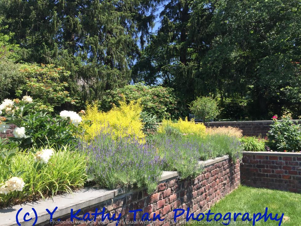 夏游Planting Field Arboretum_图1-8