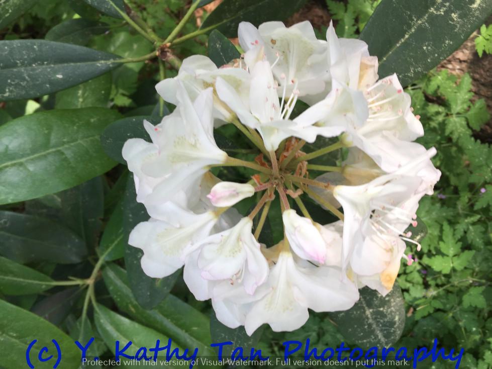 夏游Planting Field Arboretum_图1-14