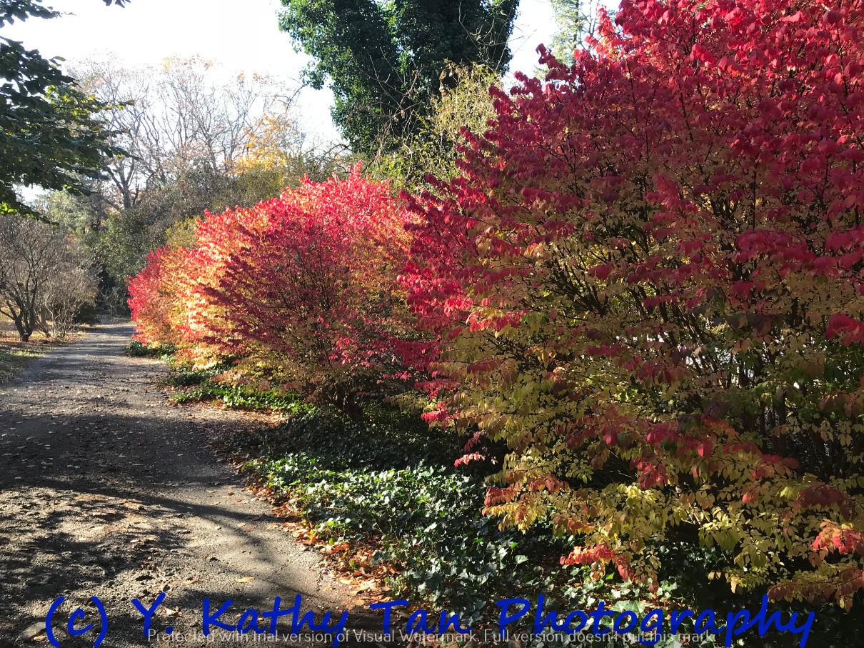 秋游Planting Field Arboretum_图1-2