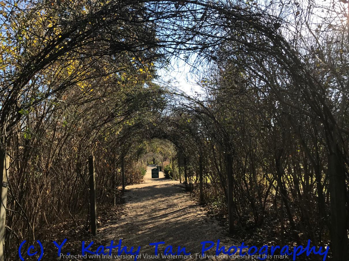 秋游Planting Field Arboretum_图1-5