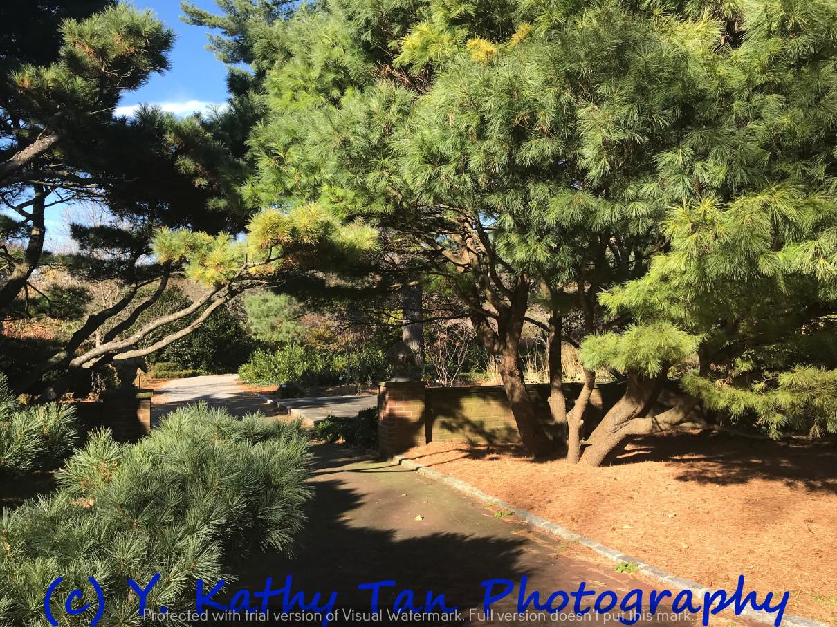 秋游Planting Field Arboretum_图1-8